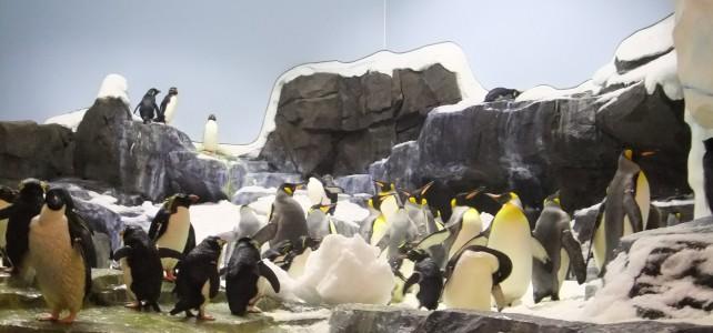 Unter Pinguinen:  Floridas coolster Ort